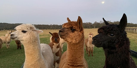 Alpaca Farm Experience tickets