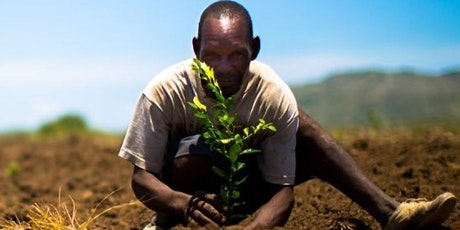 How you or your business can go carbon-neutral by planting trees!