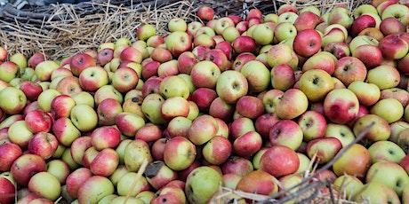 SIBILLINI IN ROSA: a Montedinove tra i profumi dell'antica e salutare mela biglietti