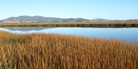 Identifying Adaptation Approaches with Living Shorelines in the Bay Area tickets