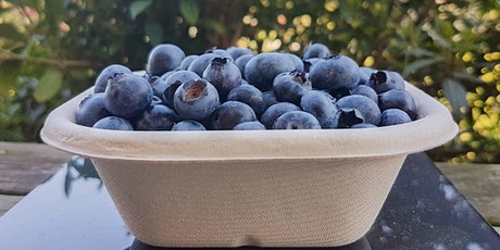 Pick Your Own Blueberries - Saturday AFTERNOON 31st of October 2020 tickets
