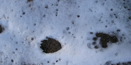 Mammal Tracks and Signs with Peter Pilbeam (online and optional outdoor) tickets