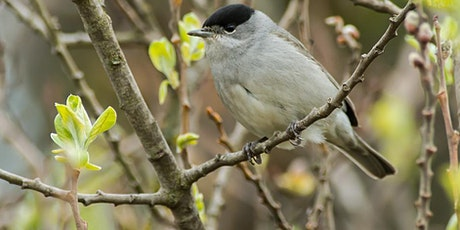 Refresher on Woodland Bird ID and Birdsong with Paul Gosling (outdoor) tickets