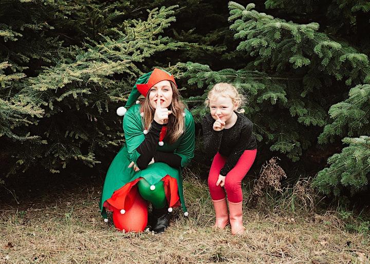 TGR presents Christmas Among The Trees image