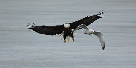 Bald Eagles: The Barr Lake Photography Hike tickets