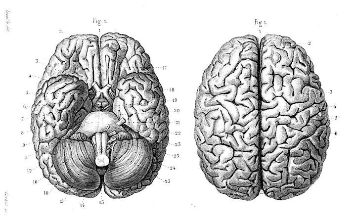 Corpus Curiosum Lecture Series  II image