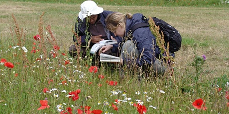 Introduction to Wildflowers with Matt Jackson (online/optional outdoor) tickets