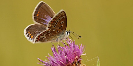 Butterfly ID and Ecology with Matt Hayes and Andrew Bladon (online/outdoor) Tickets
