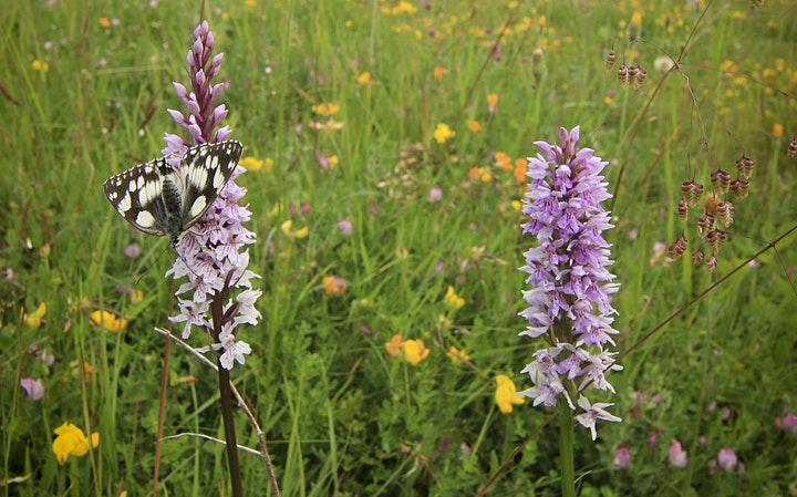 Butterfly ID and Ecology with Matt Hayes and Andrew Bladon (online/outdoor) image