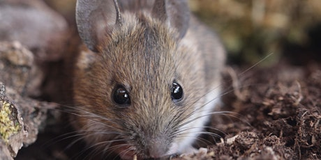 Online Introduction to Small Mammals with Peter Pilbeam tickets