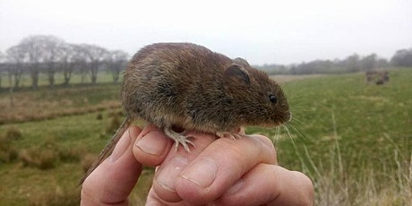 Small Mammals – Survey and ID tickets