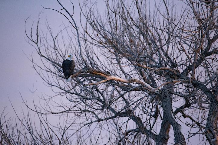 Bald Eagles: The Barr Lake Photography Hike image