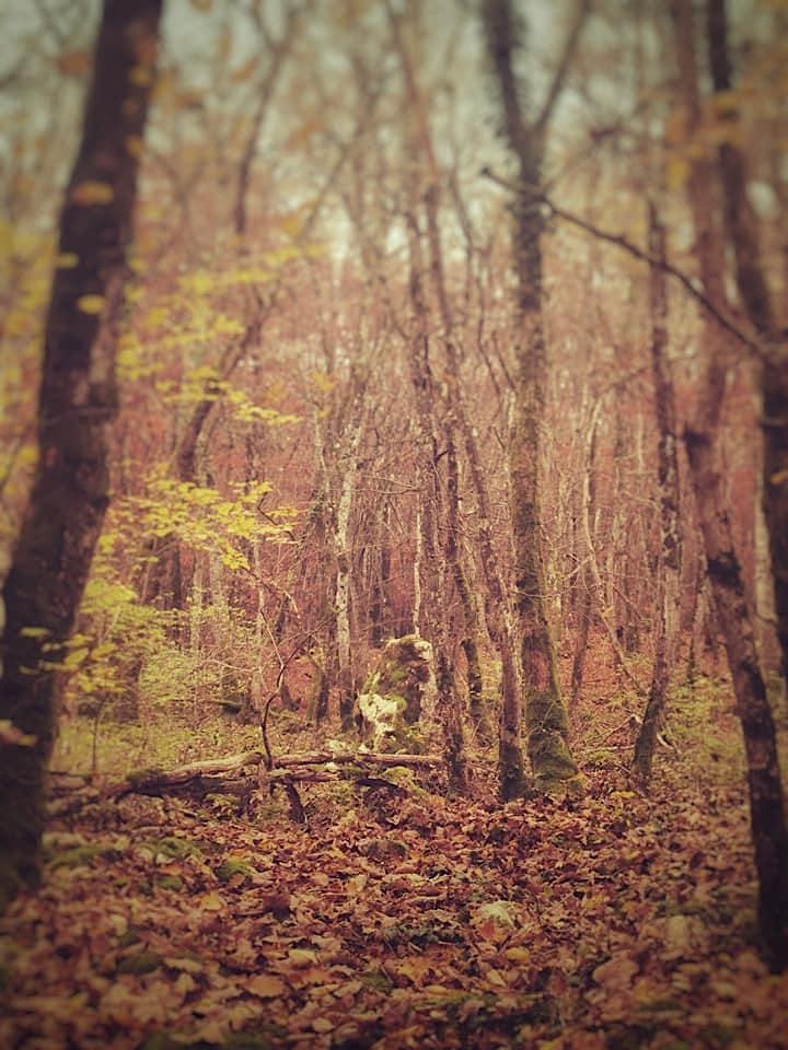 Image pour Ancrage en forêt - Rando Atelier