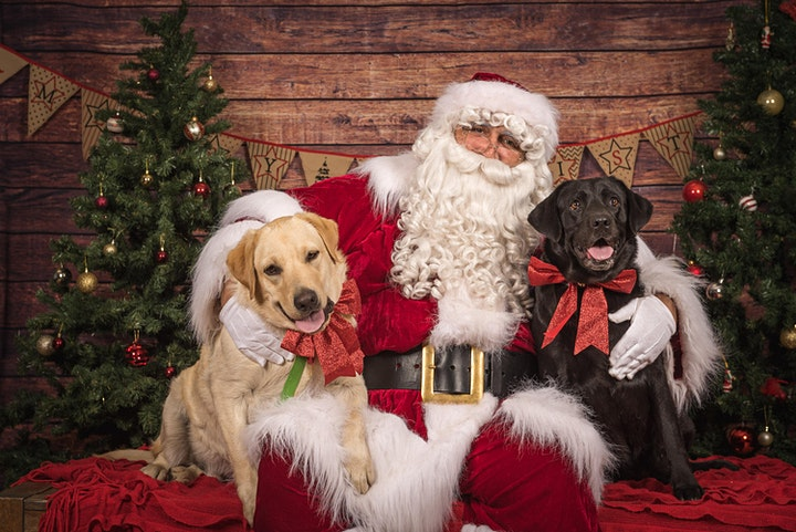 **SOLD OUT** RSPCA Santa Paws 2020 - Saturday - Room 2 image