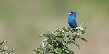 Getting to Know the Other Blue Birds biglietti
