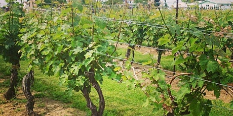 5 STARS: Tasting & Tapas Intro to Ontario Wine tickets