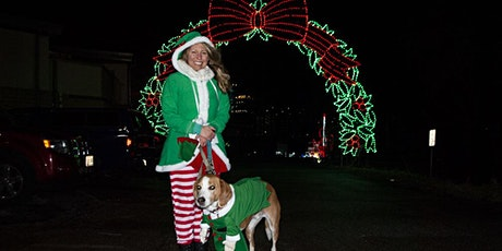 Tail Lights: Walk Your Dogs Through Symphony of Lights