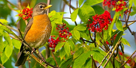 Birds & Invasive Plants at Fred Archibald Sanctuary tickets