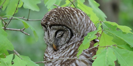 Wildlife Wednesdays:  Discover Birds with Owl Rescue and the Ecology Centre tickets