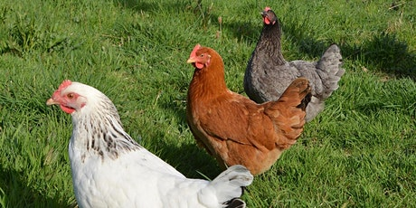 Keeping Backyard Chickens-ONLINE CLASS-Thurs. May 13, 2021 6p-8p tickets
