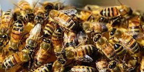Getting bees for my bee hive tickets