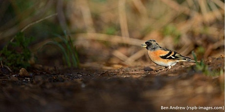 Big Garden Birdwatch Trail tickets