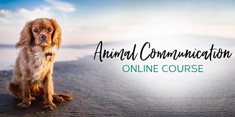 Online Workshop - Animal Communication - Spiritual Pets and more. tickets