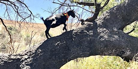 Goat Yoga Nature Walk in Agoura Hills tickets