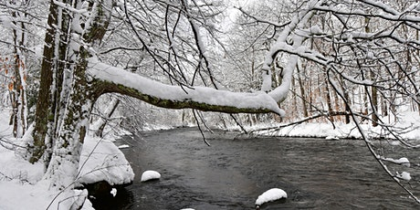 Trees - Winter Identification - Level 1 tickets