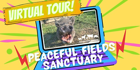 2021 New Year VIRTUAL Sanctuary Tour