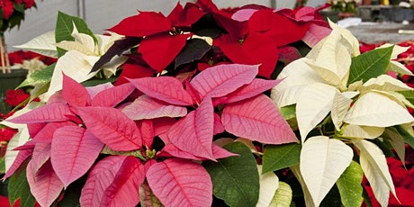 Gateway Technical College  - Elkhorn Campus - Poinsettia Fundraiser tickets