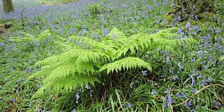 Around Britain in 15  ferns and their allies ONLINE tickets