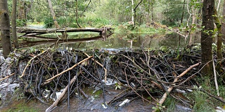 Slowing the Flow in Pickering with Natural Flood Management and beavers. tickets