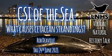 CSI of the Sea - What Causes Cetacean Strandings? by Rob Deaville