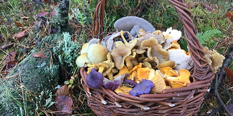 December Foraging Walk tickets