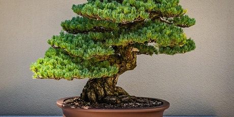 Chinese Culture: From Bonsai to Chinese Gardens tickets