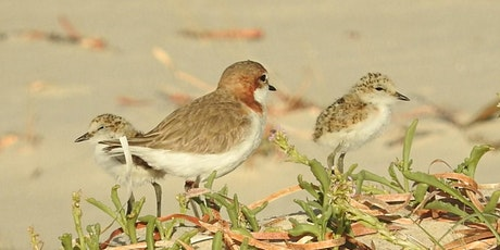 Beach-nesting Birds Info Session-Learn about the special birds on our beach tickets