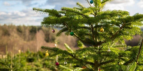 Christmas Trees at Wilderness Wood tickets