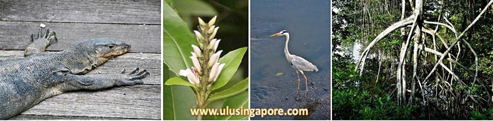 Sungei Buloh - Mangroves & More image
