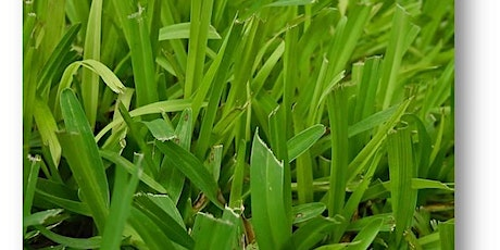 Lawns in Central Florida