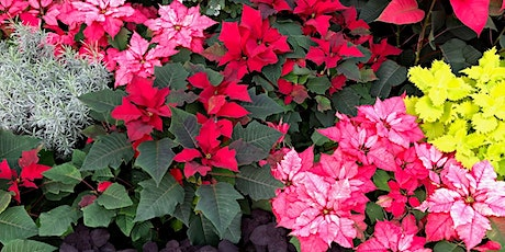 2nd Wednesday Lecture: Poinsettias at the Conservatory tickets