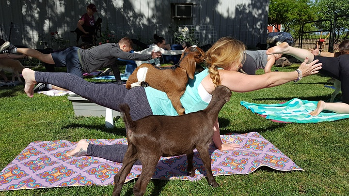 Goat Yoga with Wine & Cheese Tasting image