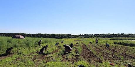 Environmental and Social Aspects of Urban Perennial Farming- Online Tickets