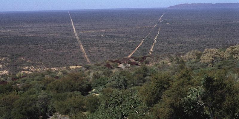 Biomasse aus Namibia?