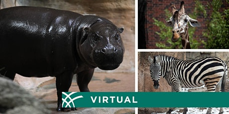 Virtual Meet-and-Greet a Lincoln Park Zoo Animal tickets