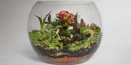 Terrarium Thursdays! Our LIVE online class. Receive your kit in the post! tickets