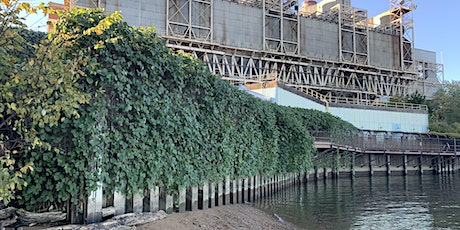 Kudzu Removal on the Power Plant Bridge tickets