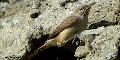 Birding Walk-About, Dead Indian Canyon tickets