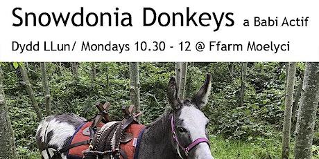 Snowdonia Donkeys and Babi Actif tickets