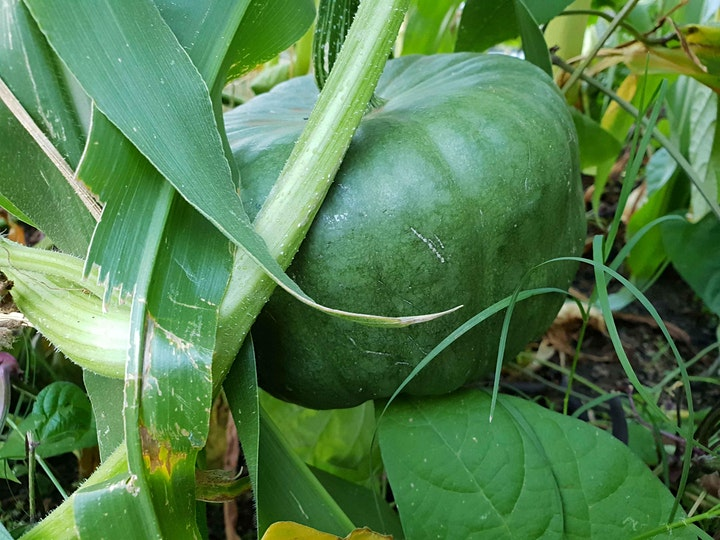 Practical food growing for self sufficiency  (Intensive) image